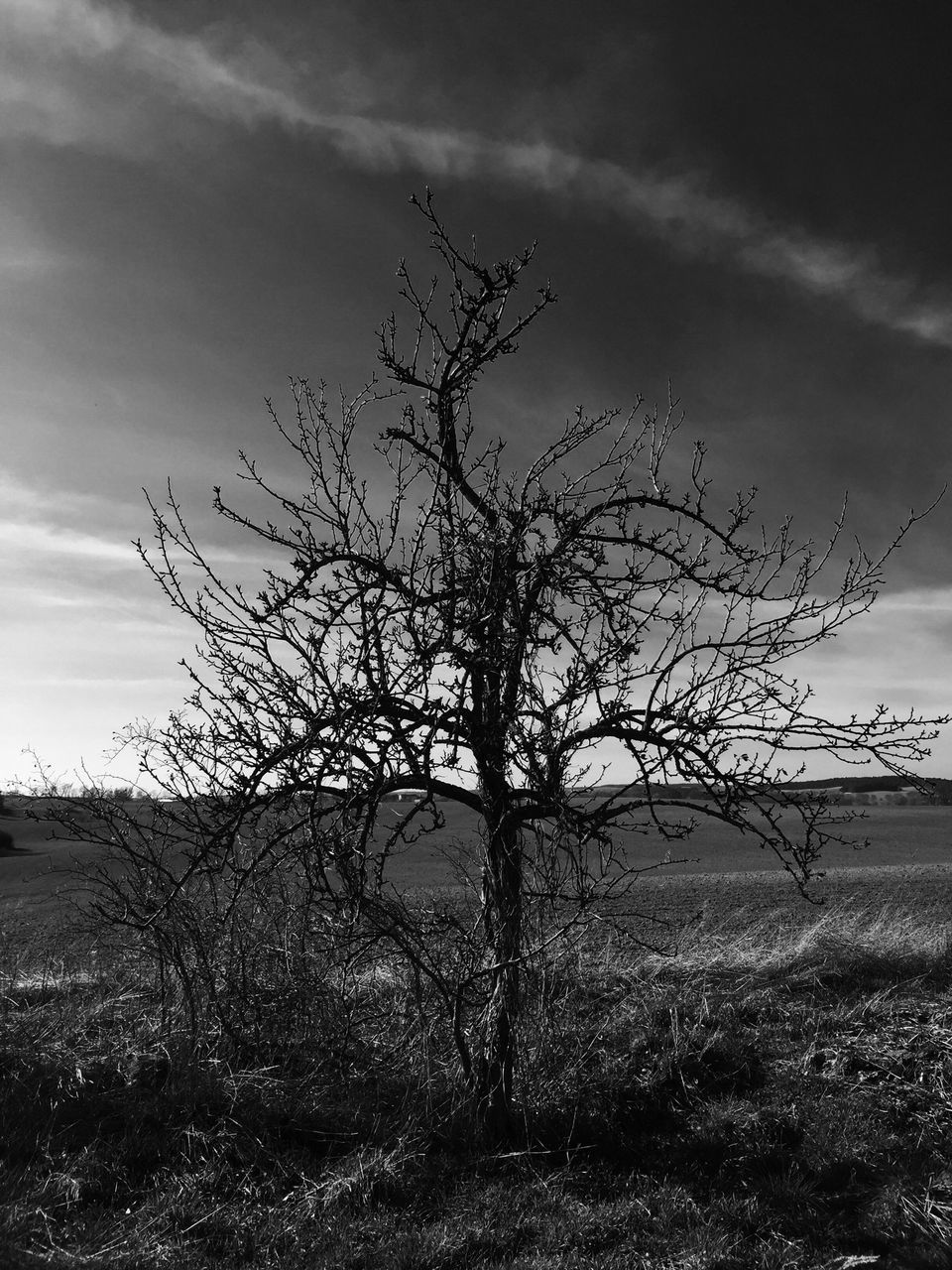 Bare Tree On Landscape Against Sky