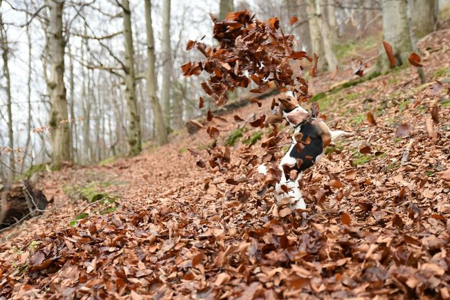 Nature Gernany Harz Animals Tiere Dogs Hunde Jackrussell Dogs Of EyeEm Herbst Autumn Collection Autumn Nature_collection Deutschland Dog❤ Action Pets