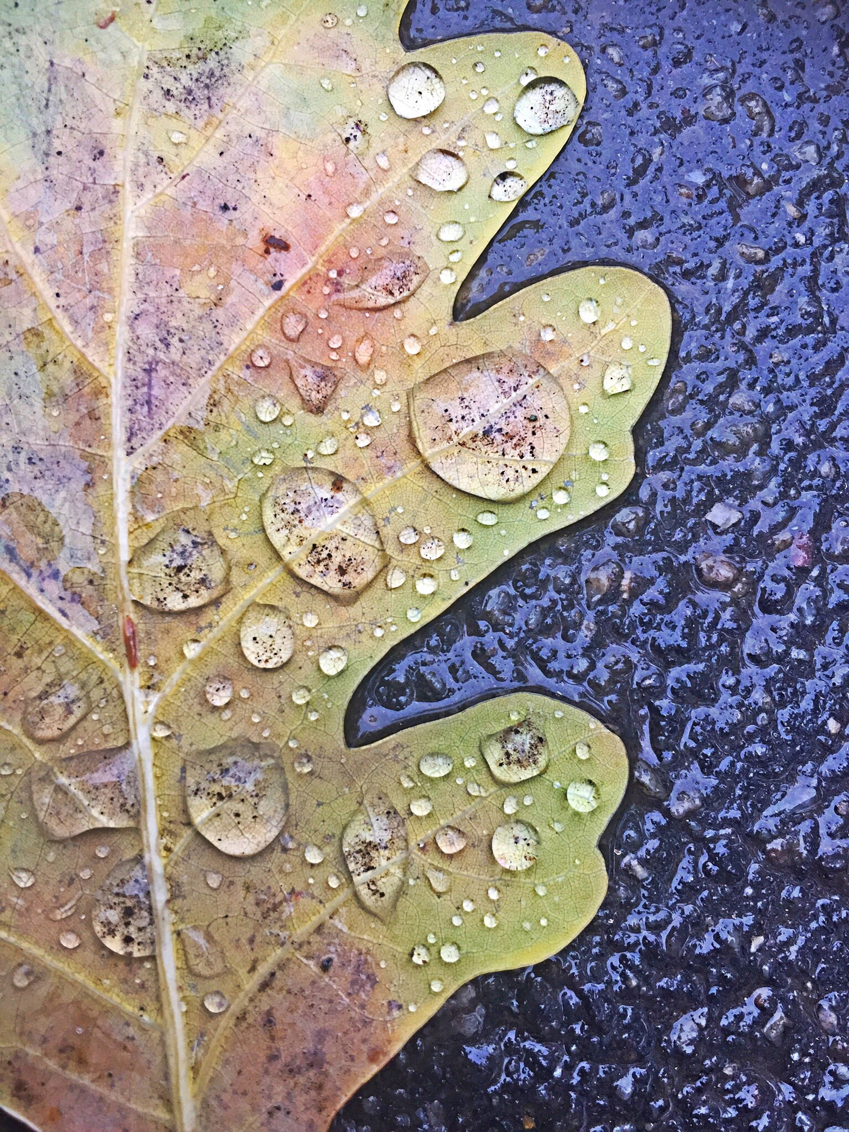 drop, leaf, water, wet, season, close-up, natural pattern, autumn, leaf vein, dry, change, pattern, fragility, dew, nature, selective focus, day, droplet, yellow, beauty in nature, fallen leaf, tranquility, outdoors, purity, botany, full frame, natural condition, waterdrop, leaves