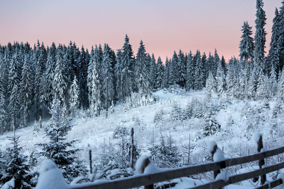 Before sunrise Beauty In Nature Cold Temperature Forest Landscape Mountain Nature No People Outdoors Scenics Sky Snow Tree Winter