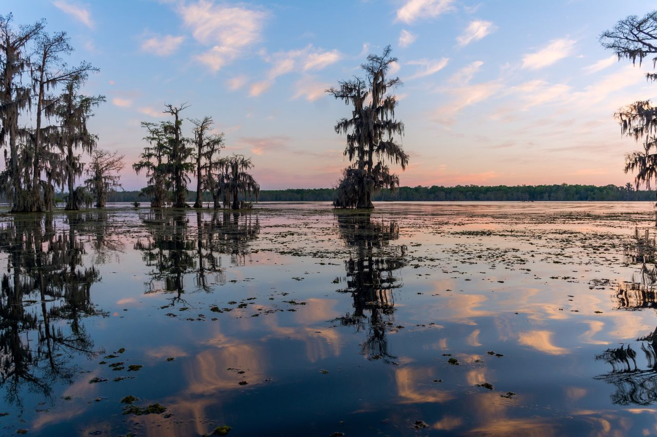 Landscapes With WhiteWall Louisiana Swamp