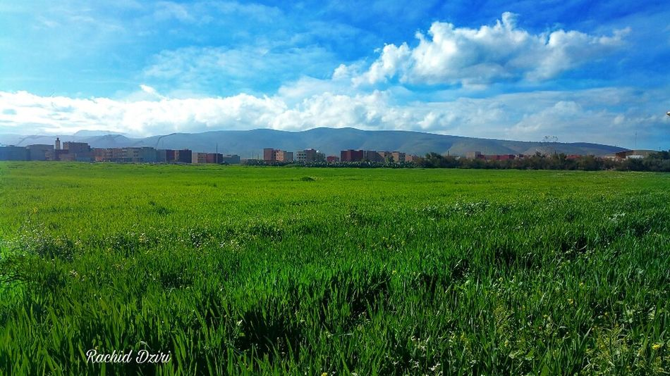 Agriculture Beauty Sky Cloud - Sky Landscape Nature Rural Scene Scenics Green Color Growth Beauty In Nature No People Urban Skyline Mountain Day Benidrar Oujda City, Morocco Oujda @morocco