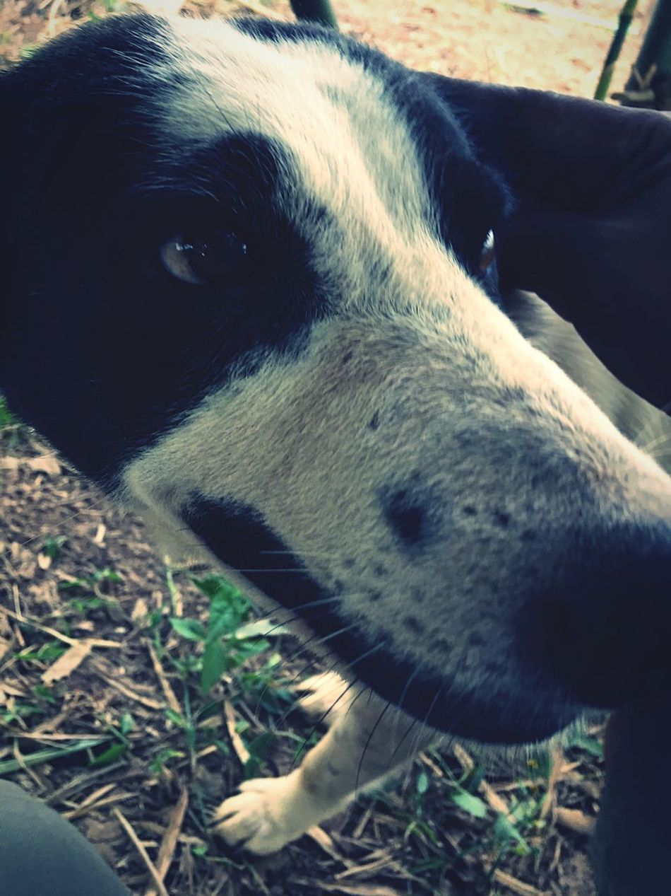 Selfie Dog  Selfies One Animal Animal Themes Domestic Animals Dog Mammal Close-up Pets No People Day Outdoors