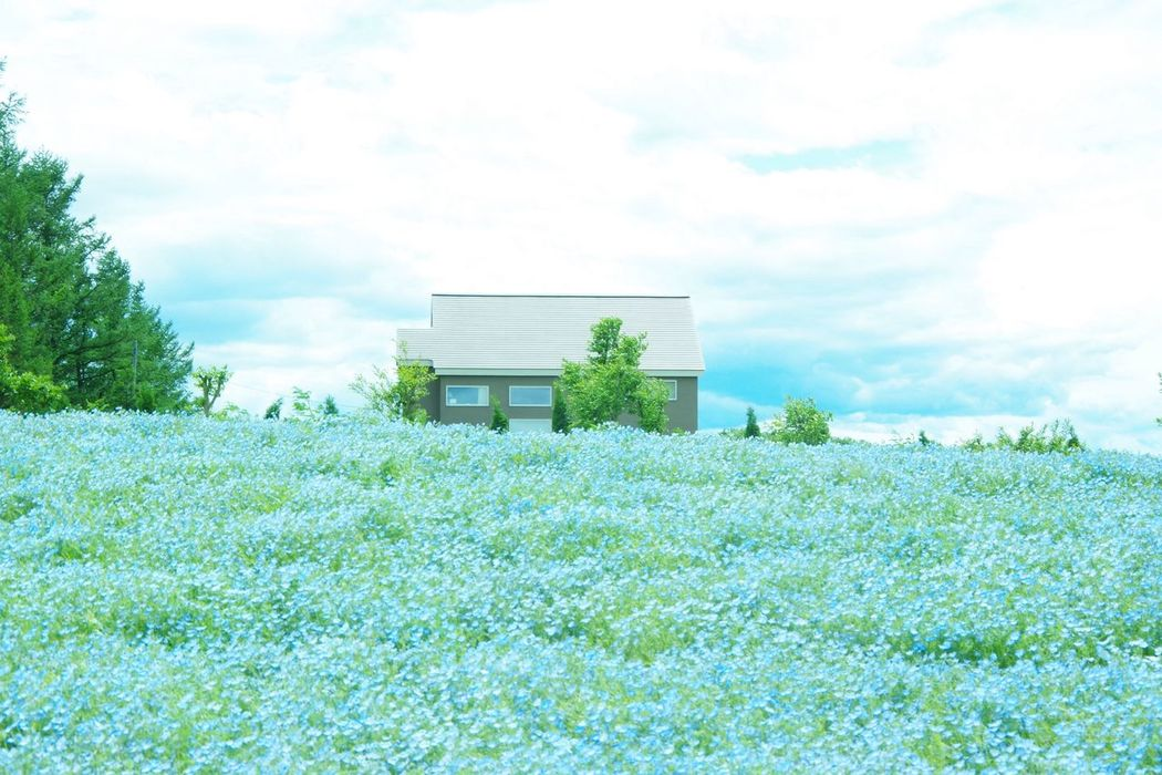 Pentax K-3 那須フラワーワールド Plant Flower ネモフィラ
