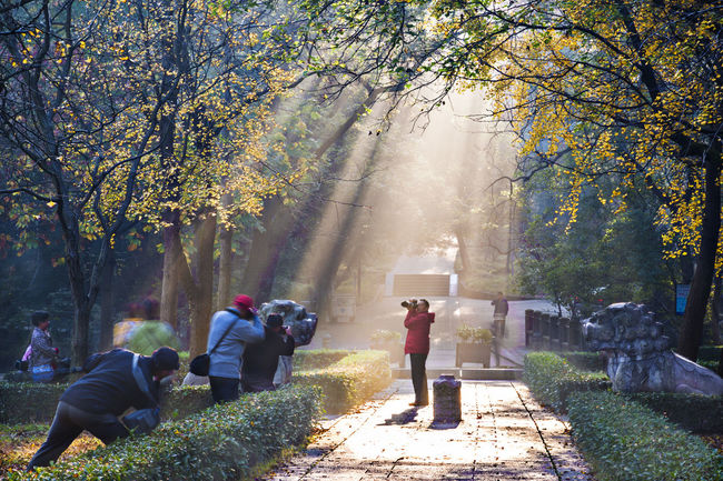 Hidden Gems-Nanjing Autumn scenery of Ming Xiaoling mausoleum Autumn Autumn Scenery Beautiful Light Diminishing Famous Forest Lights Hidden Gems  History Light Ming Dynasty Nanjing Outdoors Photographer Shinto The Early Morning Tourist Attractions Tourist Destination Tranquil Scene Tree Leisure Activity Ming Xiaoling Mausoleum Nature Perspective Tranquility