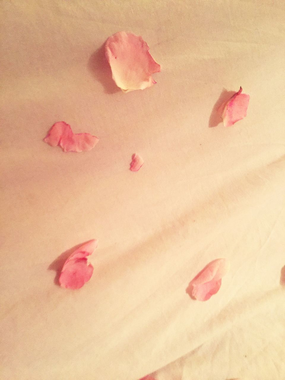 pink color, petal, rose - flower, no people, nature, flower, full frame, sand, beauty in nature, rose petals, backgrounds, fragility, close-up, flower head, day, freshness, outdoors