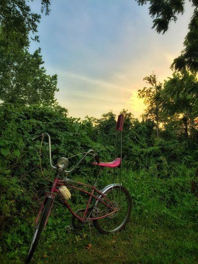 Cruisin' Bicycle Sunset