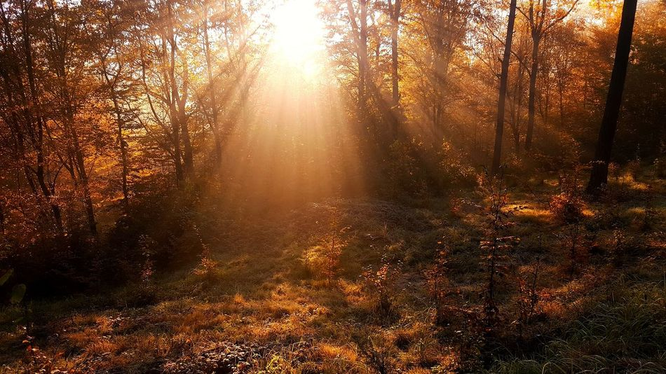 Beauty In Nature Day Forest Landscape Nature No People Outdoors Poland Scenics Sun Sunbeam Sunrise Tranquility Tree