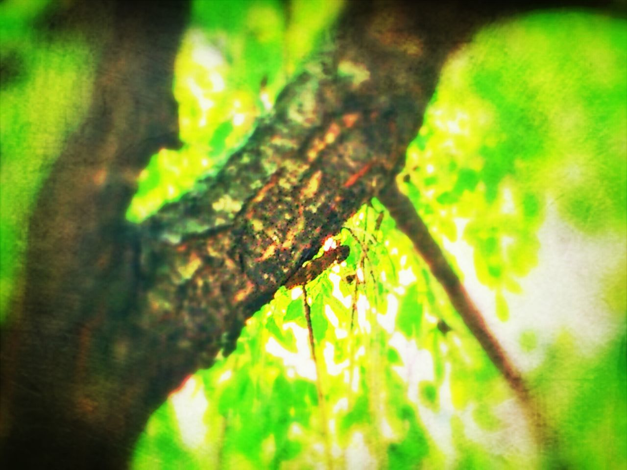 Does it sound noisy? Cicada Summertime Nature Japan