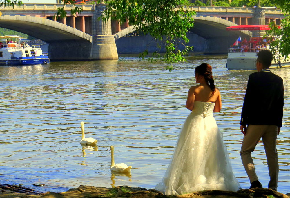 Wedding Couple with Swans on banks of the Moldau, Prague Water Wedding Bride Wedding Dress Adults Only Two People Togetherness Connection Young Adult Happiness Ceremony Lifestyles Swans Mate Pairs river Steadfast Two Is Better Than One Two wedding photography Wedding Ceremony Outdoors Adult Celebration love Prague Moldau Czech Republic