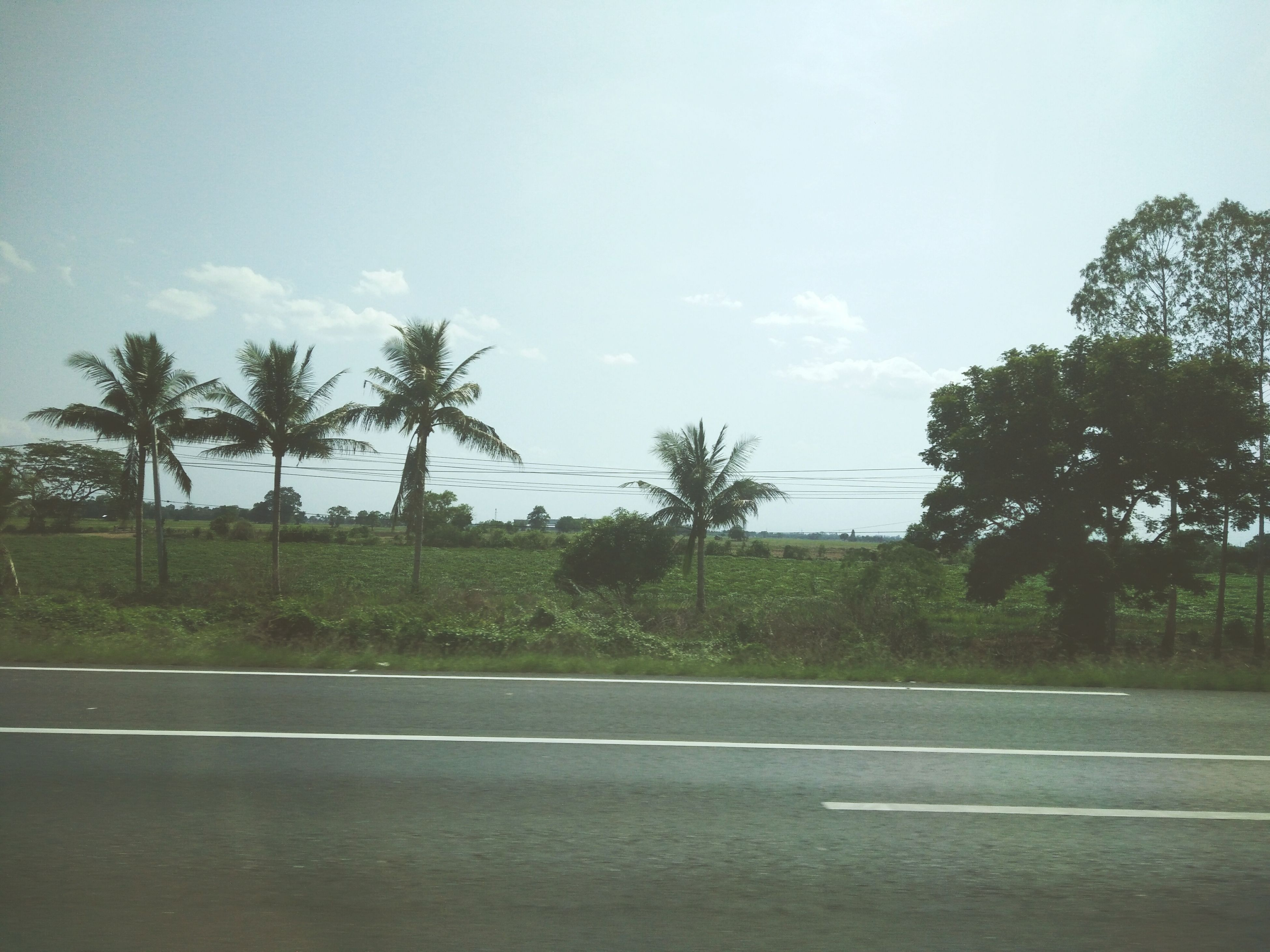 tree, sky, road, tranquility, tranquil scene, growth, nature, landscape, transportation, scenics, palm tree, beauty in nature, day, field, grass, street, cloud - sky, cloud, outdoors, no people