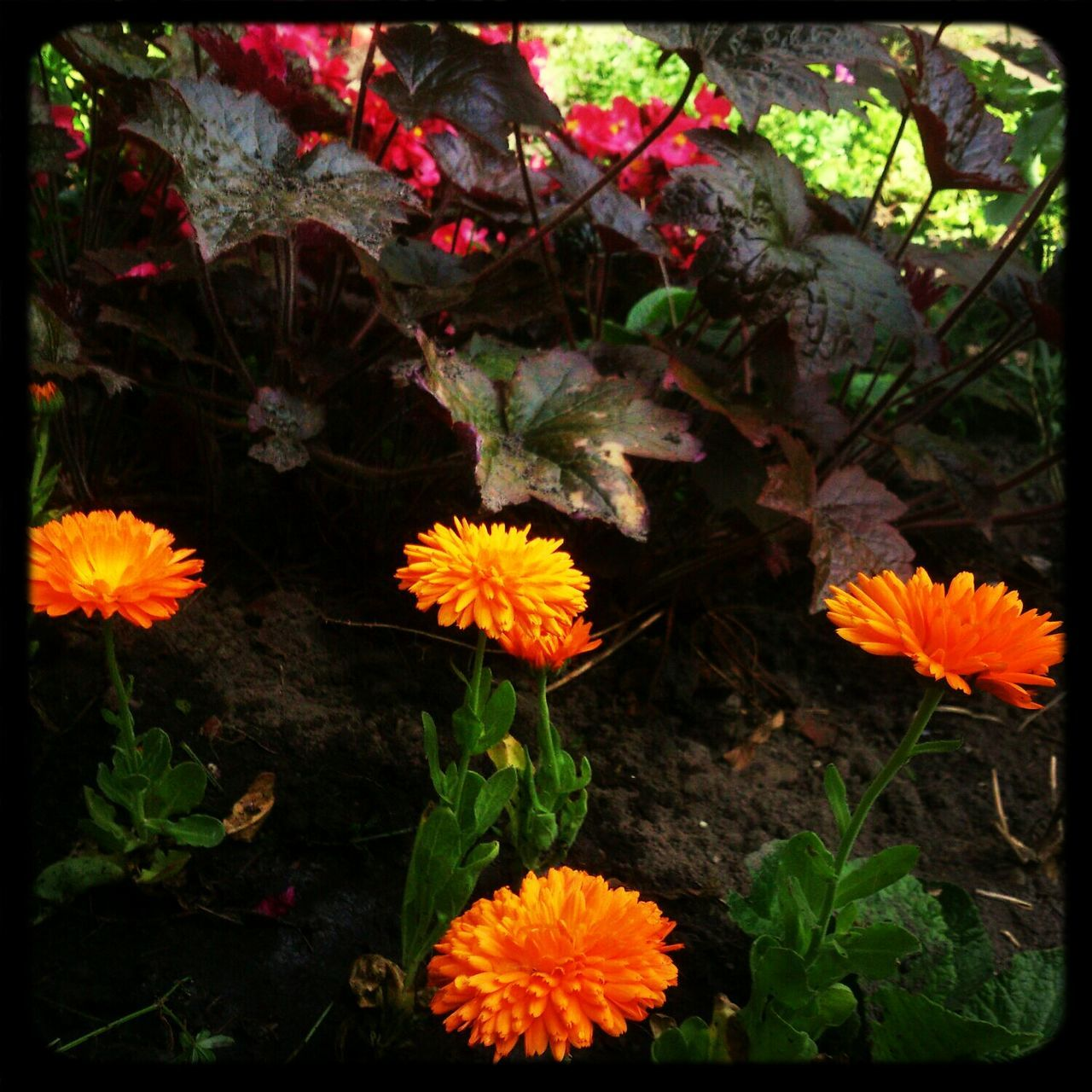 We Are Onefootball the garden is ready! Dutch Orange Flowers In My Garden
