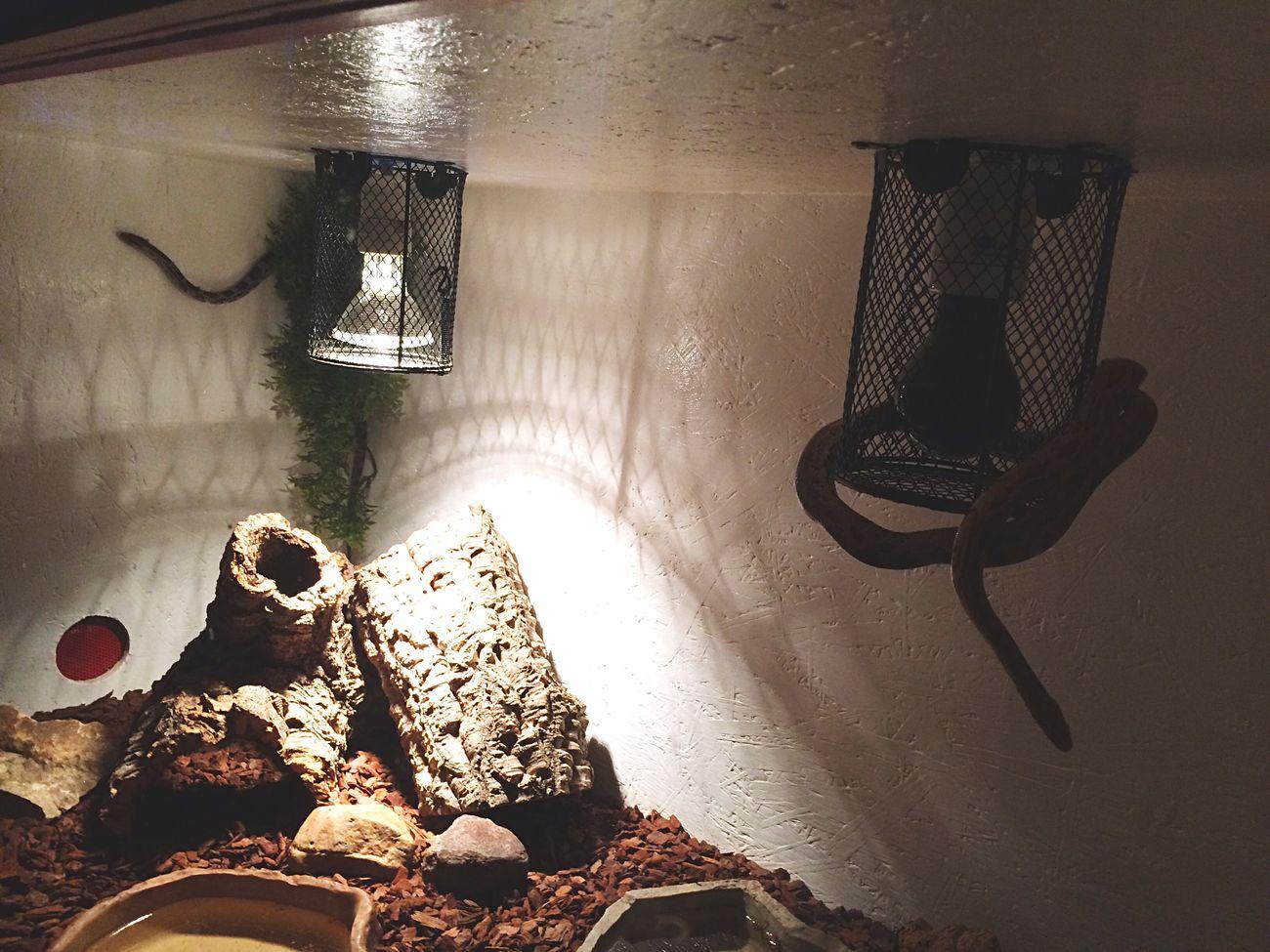 Bender&Djingis auf Erkundungstour 😂 Noborder Snake Wildlife