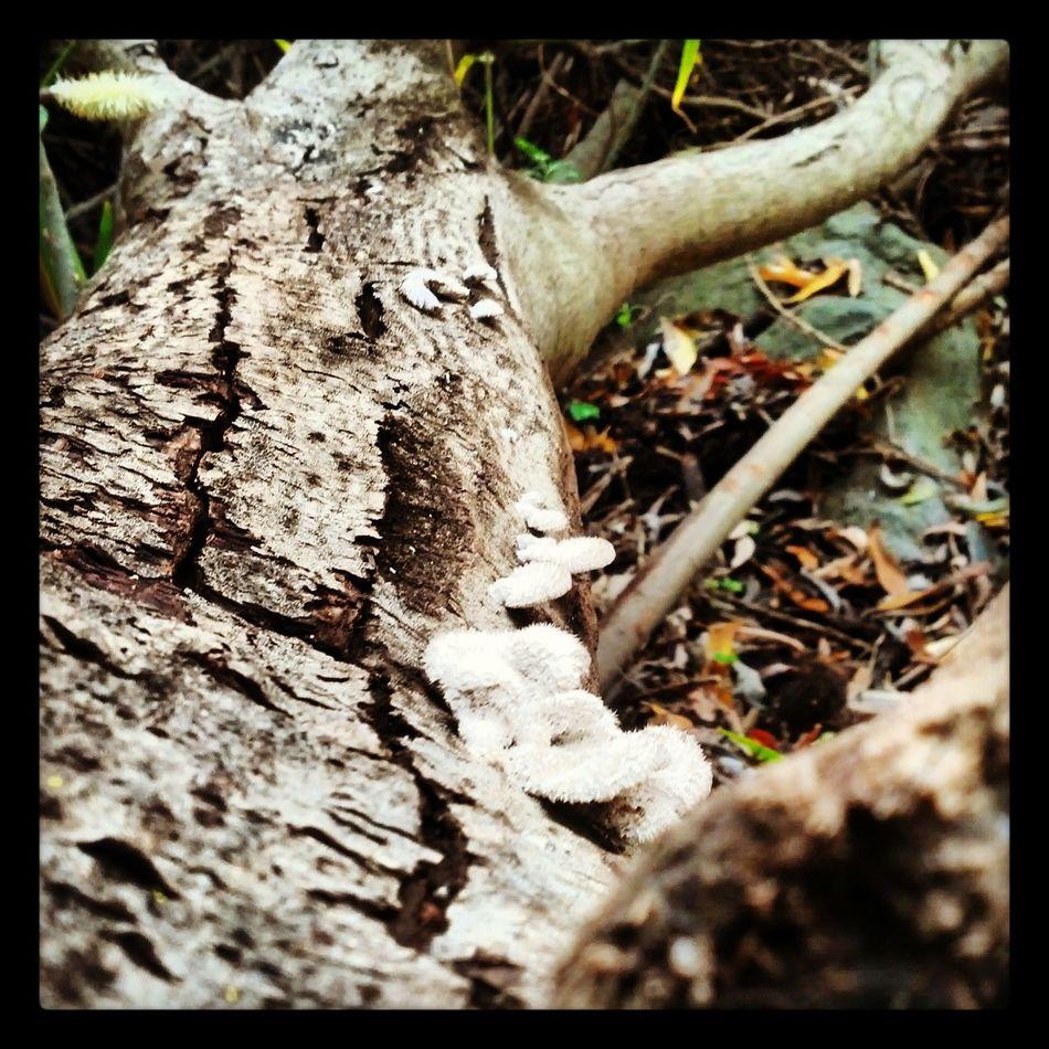 En los pequeños detalles, es donde reside la belleza de las cosas Forest Mushrooms Campo Setas