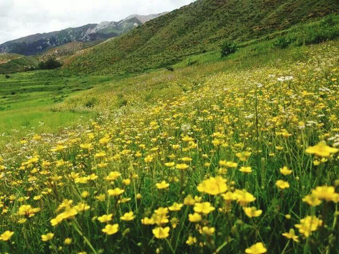 Homeland Is Full Of Happy And Full Of Flower