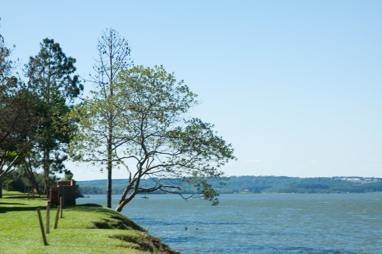 tree, nature, beauty in nature, outdoors, day, tranquil scene, tranquility, sky, clear sky, scenics, sea, landscape, blue, growth, scenery, water, no people, branch, grass, blue sky