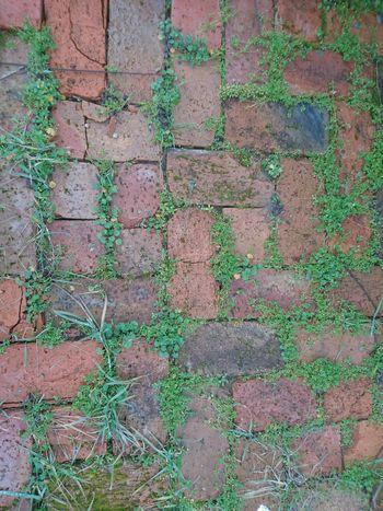 Texture Texture Photo Textures And Surfaces Textured  Brick Brickstones Brick Wall Grass Grassy Grass And Brick