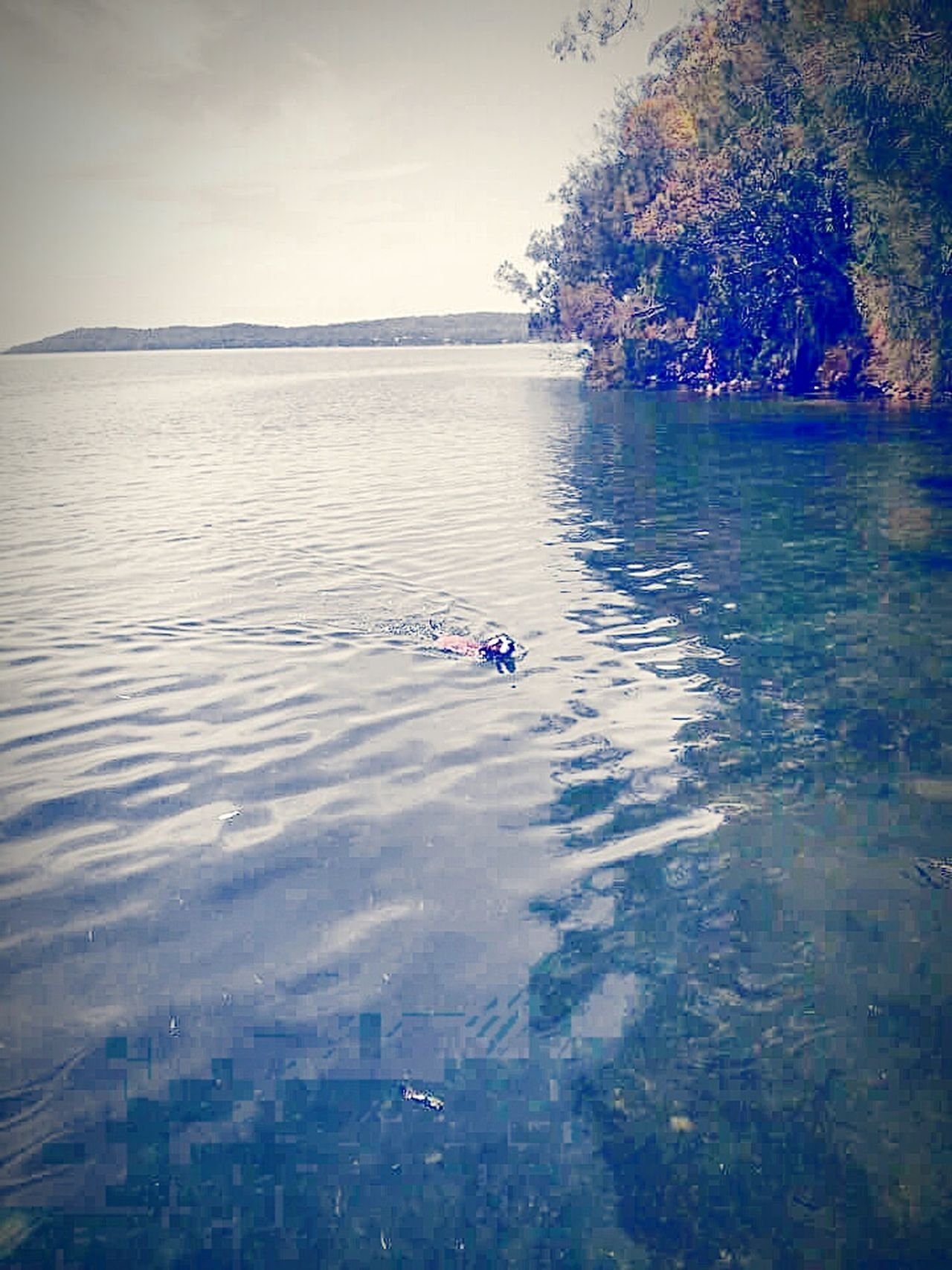 Color Colorful Water Colors I Love My Pitbull Dog Dog❤ Lake Great Lakes Lakelife Lake Life Halfandhalf Half&half Halftone