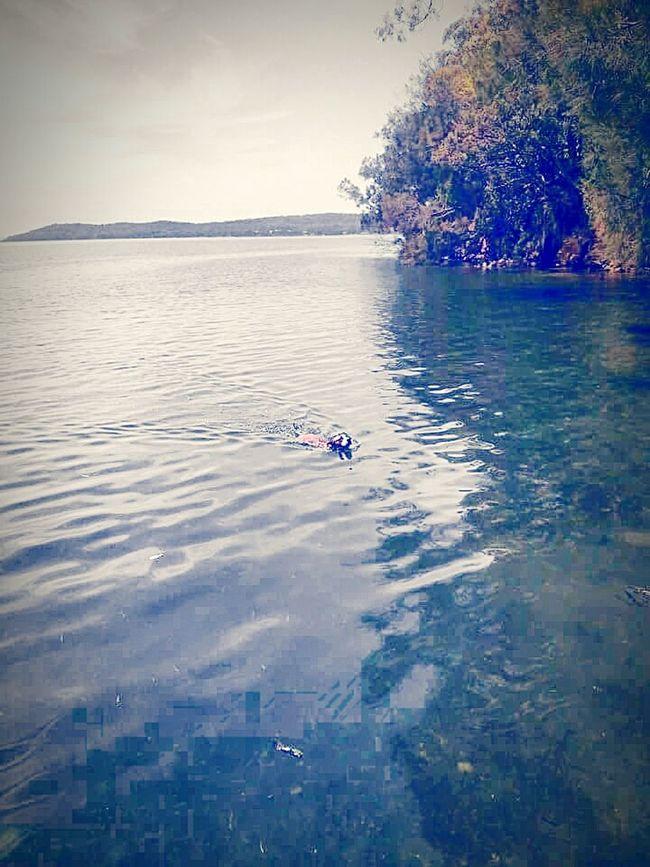 Color Colorful Water Colors I Love My Pitbull Dog Dog❤ Lake Great Lakes Lakelife Lake Life Halfandhalf Half&half Halftone