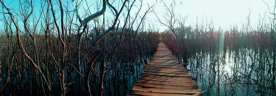 A different way The Way Forward Water Nature Day No People Outdoors Growth Scenics Sky Beauty In Nature Tree Enjoying Life Costa Rica Y Su Naturaleza Puravida Travel Destinations Horizon Over Water Mangrove Forest Nature Beauty In Nature Hidden Places EyeEm Best Shots Sunny