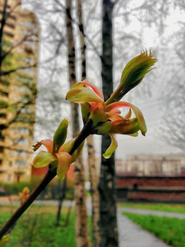 PixlrExpress Blossom Blooming Springtime Raindrops First Leaves Eyeemphoto