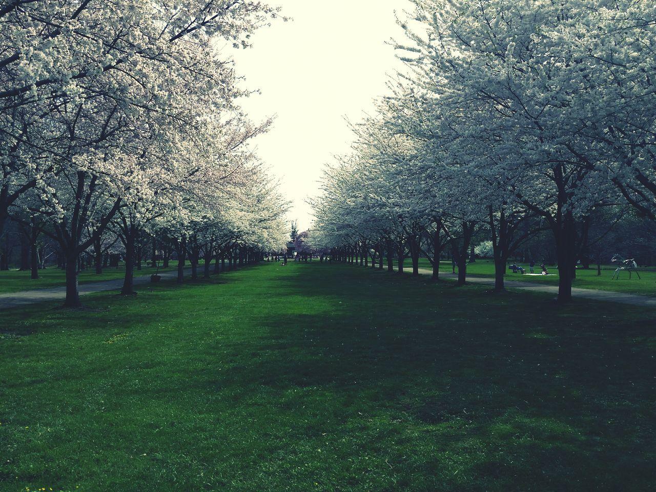 Philadelphia Japanese Tea Garden Fairmountpark