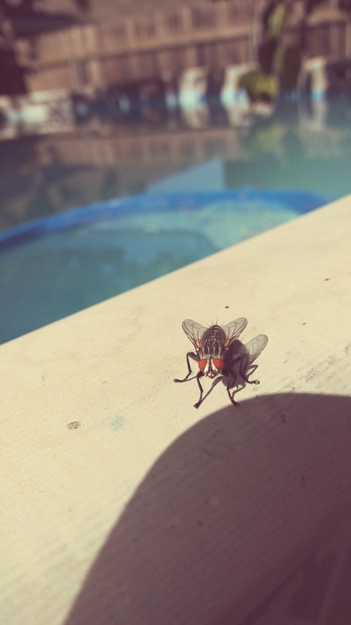 insect, animals in the wild, animal themes, day, sunlight, outdoors, one animal, nature, sand, shadow, close-up, no people