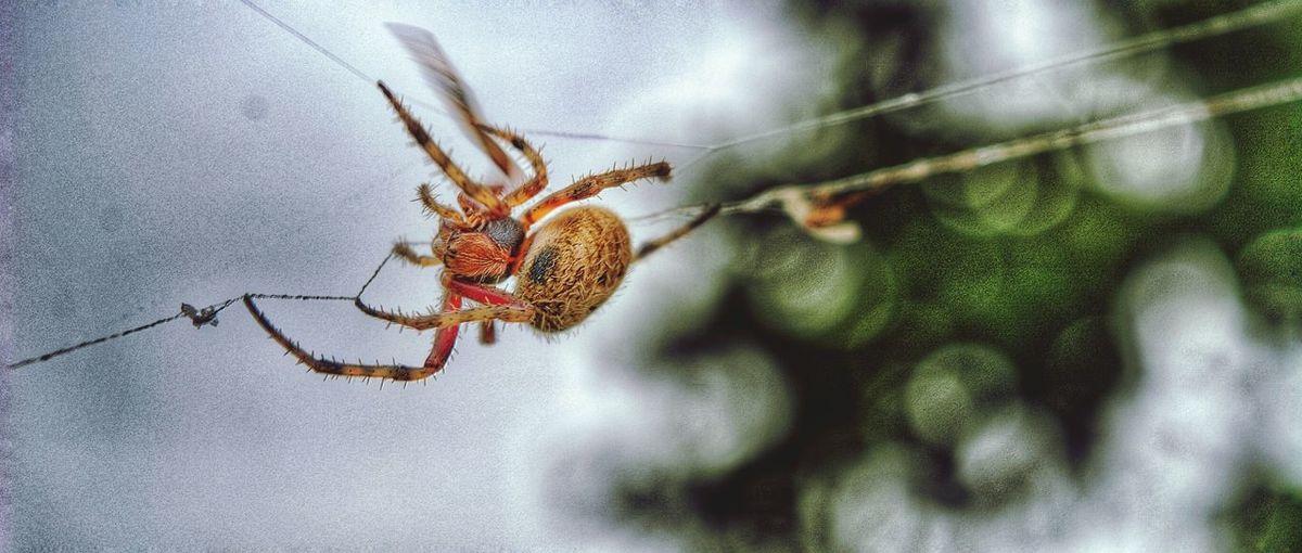Animals In The Wild Wildlife Insect Spiderweb Spiderworld Nature Photography Naturelover Anthropoda