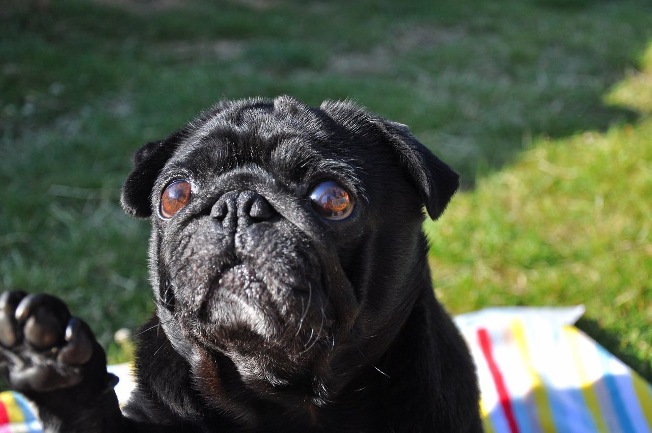 Beautiful stock photos of eyes, Alertness, Animal Head, Animal Themes, Black Color