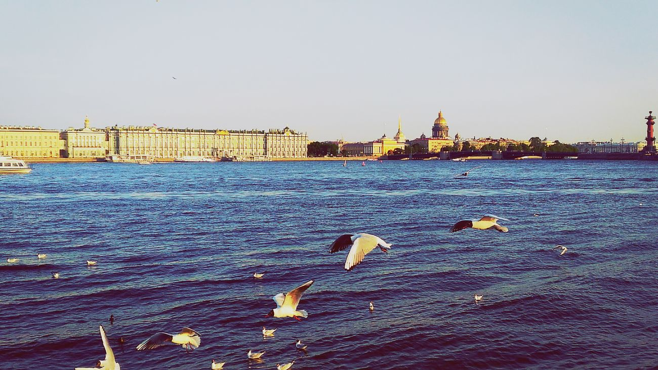 Hello World Hi! Flying Birds Birdsonthewater First Eyeem Photo