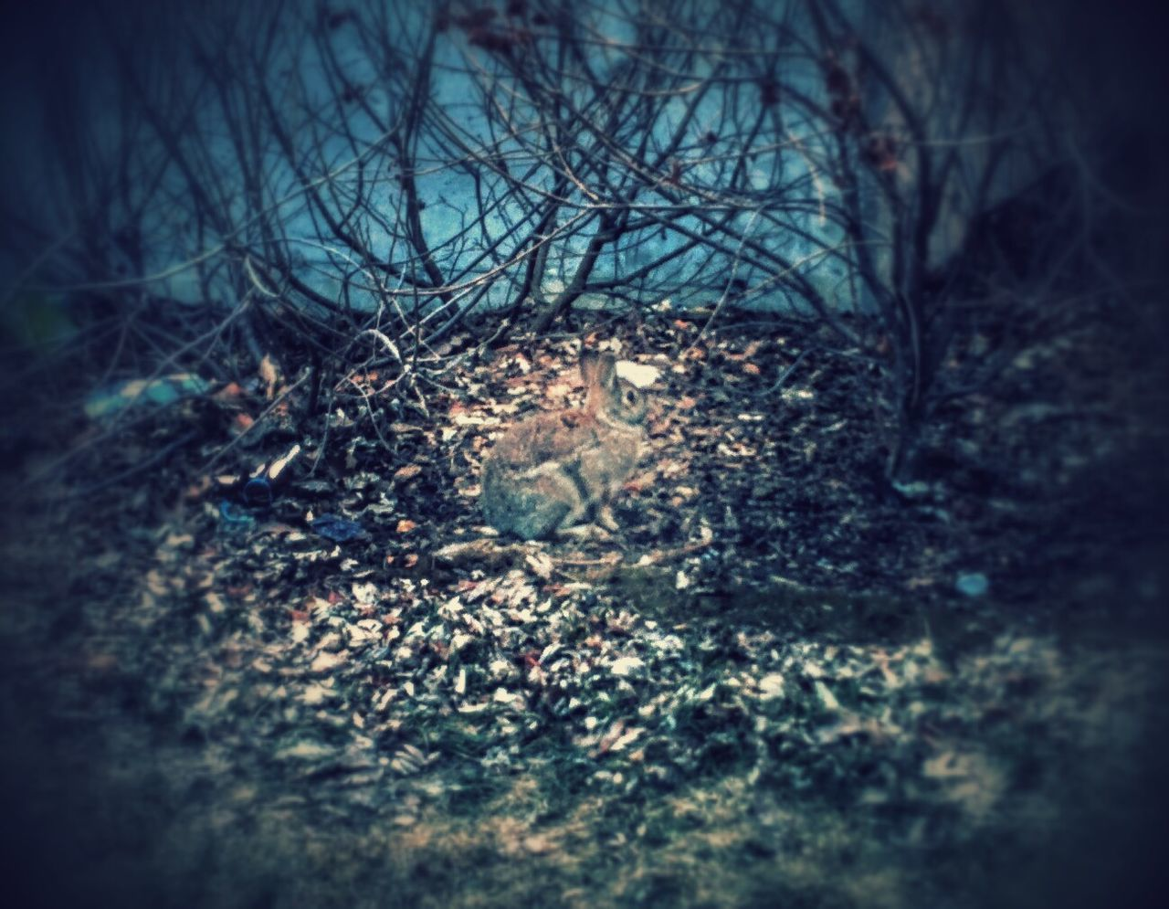 really had to edit this picture to highlight the Rabbit. Nature's camouflage is amazing! Animal_collection Connected With Nature
