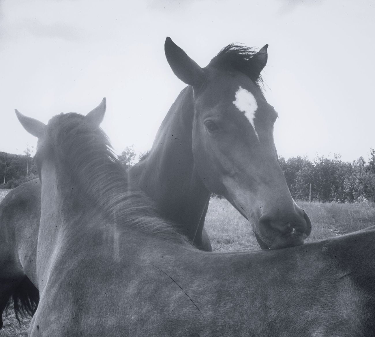 Blackandwhite Horses Sweet Little Horses Days In June