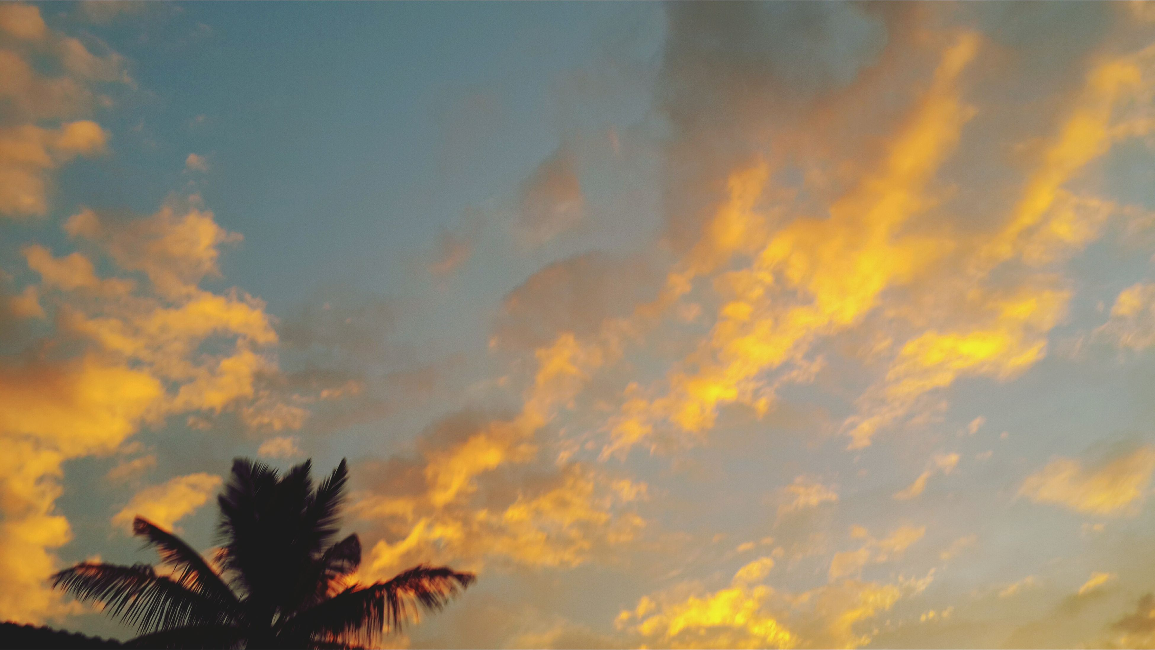 sunset, sky, low angle view, cloud - sky, beauty in nature, tranquility, scenics, orange color, nature, tranquil scene, cloudy, tree, silhouette, cloud, dramatic sky, idyllic, palm tree, growth, outdoors, no people