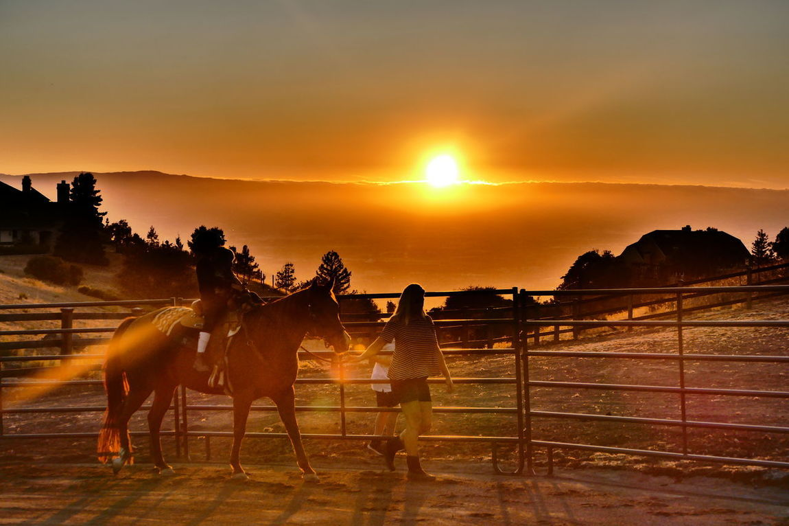 Sunset Nature Tree Sky Outdoors Beauty In Nature Landscape Scenics People Mammal Domestic Animals Day Horse Back Riding Kids Children Childhood Sunset_collection California Orange Yellow