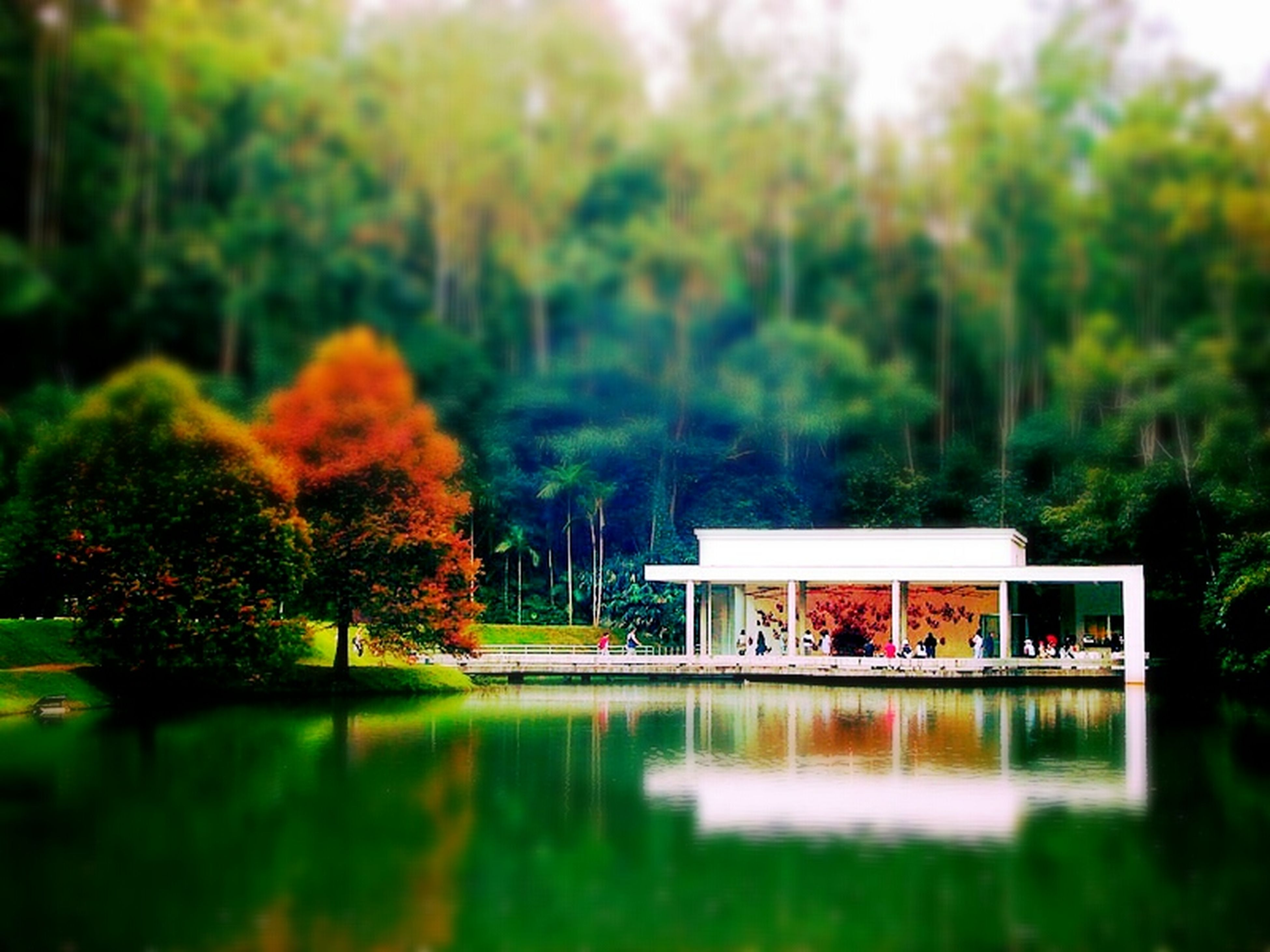tree, water, reflection, waterfront, built structure, architecture, growth, building exterior, lake, nature, tranquility, tranquil scene, green color, beauty in nature, house, autumn, pond, day, outdoors, scenics