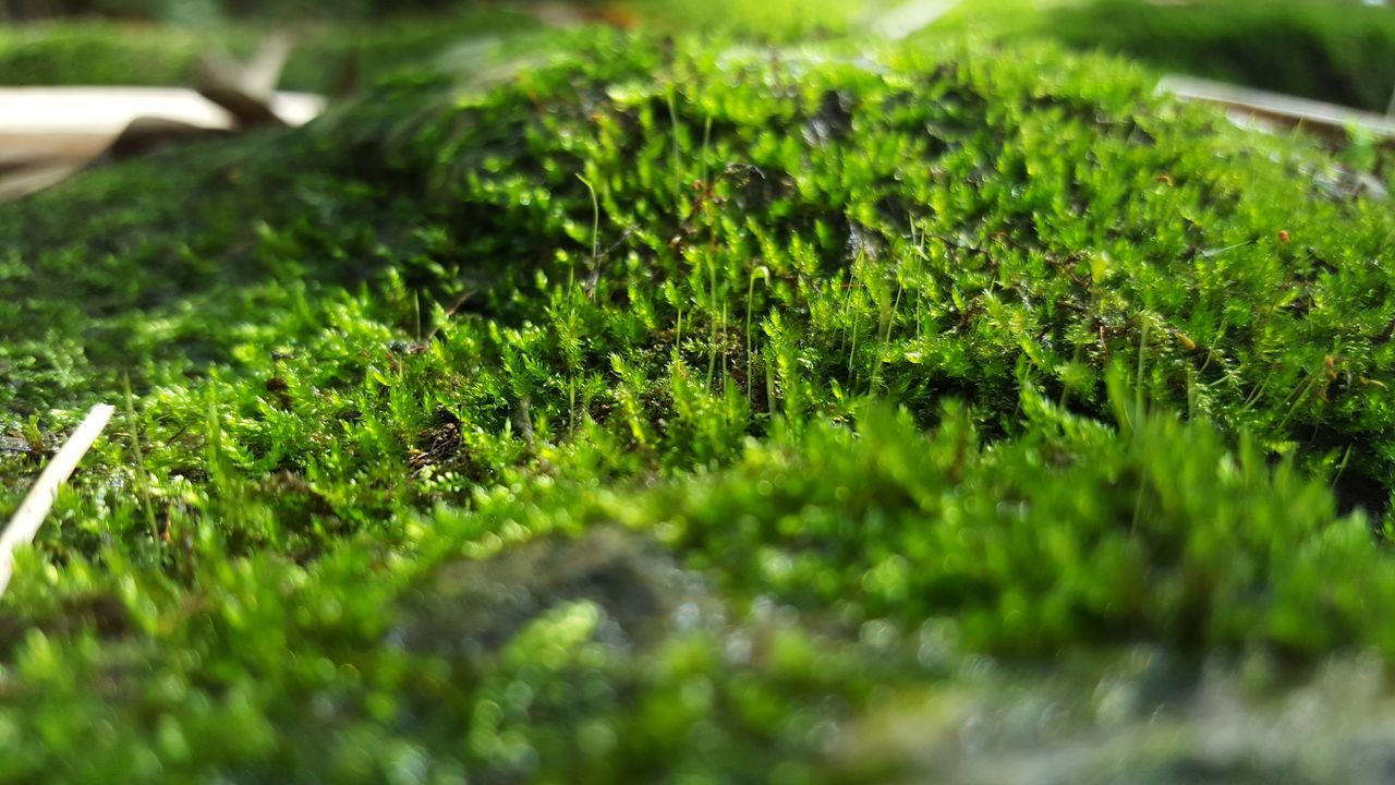 Micromundo Capture The Moment First Eyeem Photo EyeEm Nature Lover Islandlife