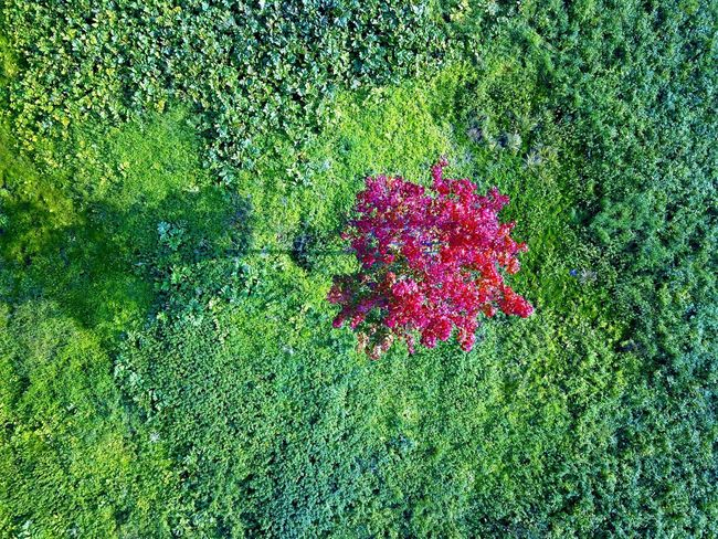 Autumns comes Nature Green Color Growth Grass Flower Green Beauty In Nature Tranquility High Angle View Field Plant No People Outdoors Day Fragility