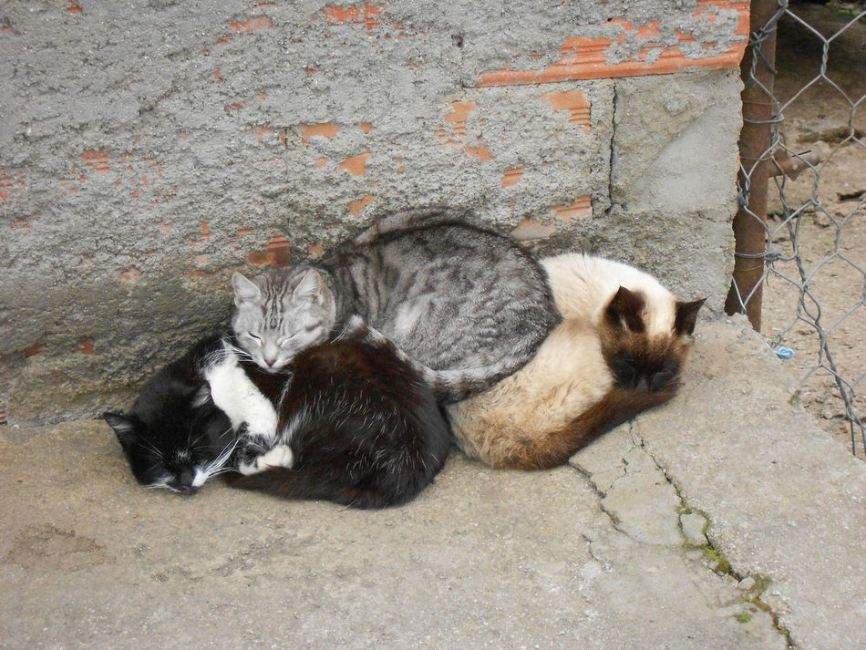 Animal Themes Cats Cute Pets Cute Pets Cat High Angle View Nature Pets Sweet Sweet Dreams
