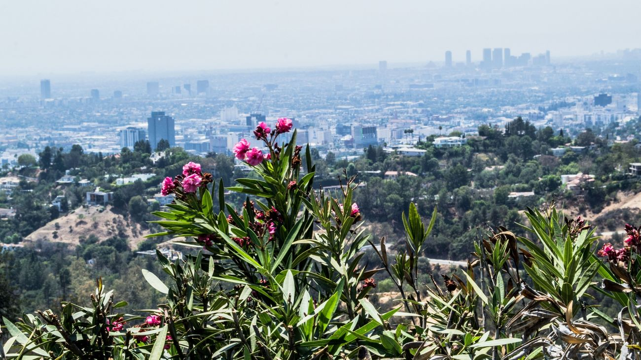 City Views and Flowers in Los Angeles Cali California City Epic Flowers Friendlylocalguides Griffith Landscape Losangeles Mustsee Observatory Panorama Panoramic USA Views