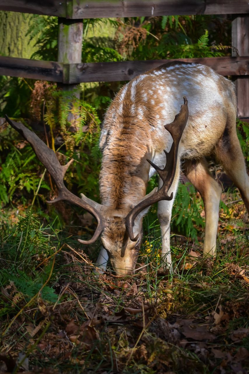 animal themes, animals in the wild, day, no people, animal wildlife, nature, outdoors, mammal, full length, grass, close-up