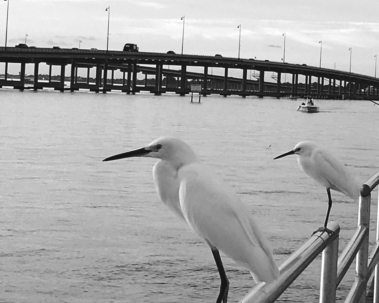 bird, animal themes, animals in the wild, water, sea, animal wildlife, nature, sky, day, railing, outdoors, cloud - sky, perching, seagull, beauty in nature, no people, beak, horizon over water