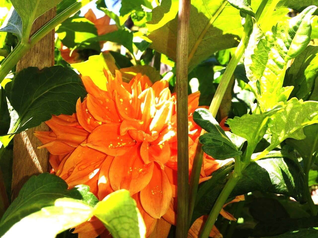 growth, flower, leaf, nature, freshness, beauty in nature, petal, fragility, plant, flower head, blooming, sunlight, day, outdoors, no people, close-up, hibiscus
