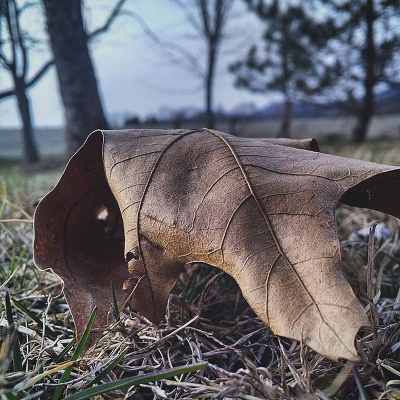 April Leaf Spring Fall Photographyofepic Photo Photography Beautiful Outside Beauty Picture Justalittlephoto Justalittle Picoftheday Like Follow