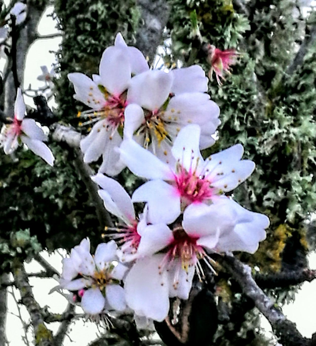 Wonderful Nature on Mallorca ..... Nature Growth Beauty In Nature Flower Flower Head Close-up Outdoors Petal No People Fragility Plant Day Tree Branch Freshness PalmaDiMaiorca GetbetterwithAlex Originalpicture