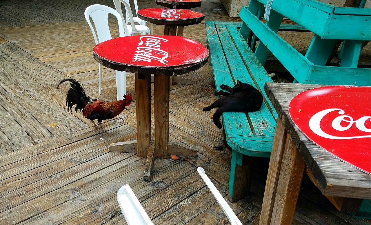 Cat and Rooster at the kiosks at Culebra Puerto Rico, PlayaFlamenco