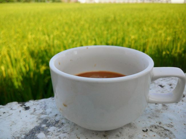The Essence Of Summer Coffee Time Rice Field Yilan Yilan, Taiwan Beautiful View Beautiful Nature Green Nature The Great Outdoors - 2016 EyeEm Awards The View And The Spirit Of Taiwan 台灣景 台灣情
