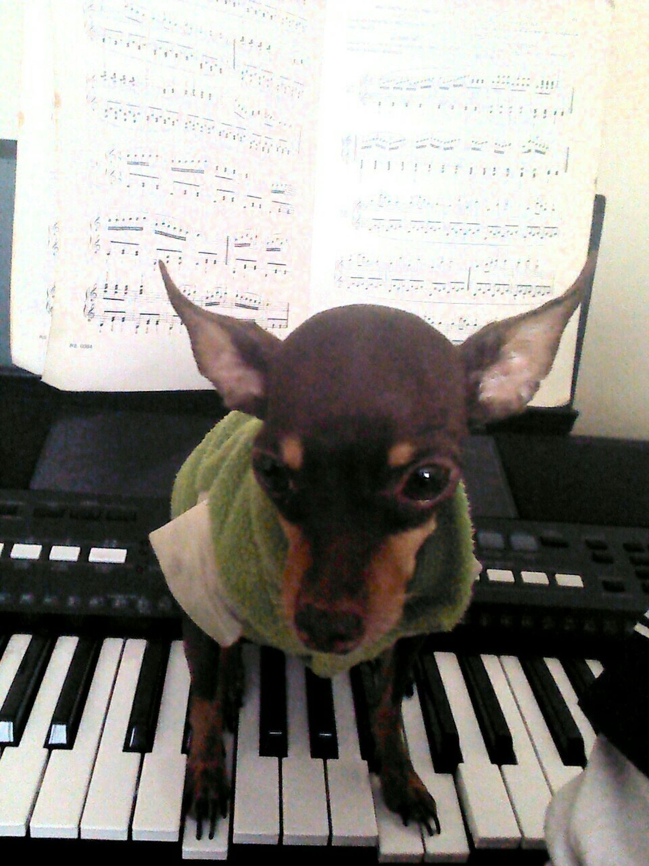 Profesor De Piano Conceptual Photography  Picture Composite First Eyeem Photo Eye4photography  Dog Love