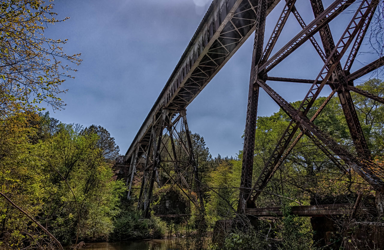 tree, low angle view, bridge - man made structure, sky, outdoors, day, no people, architecture, nature, built structure, forest