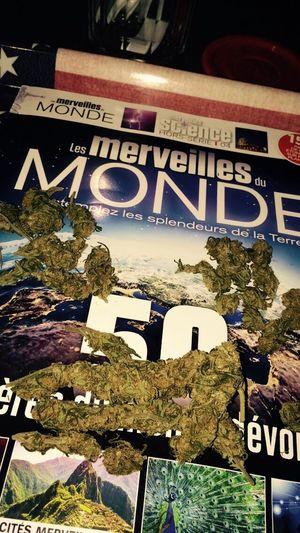 Les merveilles du monde Wonderland Malice In Wonderland Smoking Weed Weed
