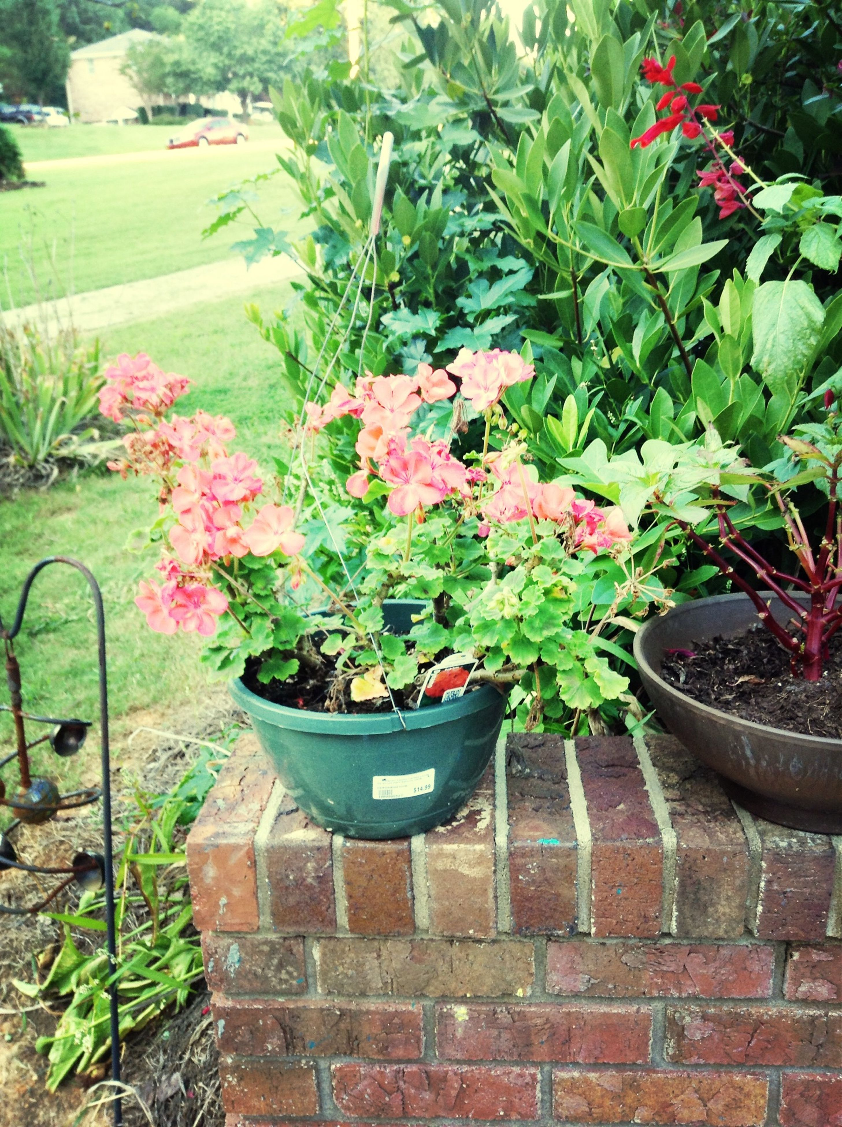 plant, flower, growth, potted plant, green color, freshness, leaf, nature, beauty in nature, flower pot, fragility, front or back yard, high angle view, growing, outdoors, day, green, no people, formal garden, blooming